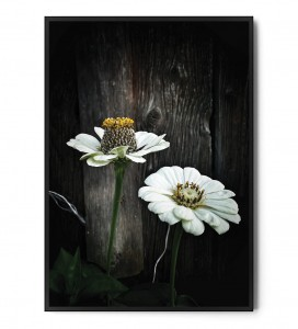 Plakat DARK FLOWERS